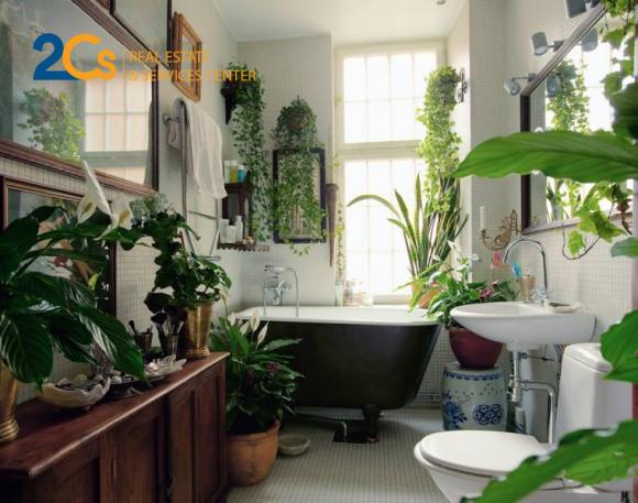 Mảng xanh trong phòng tắm