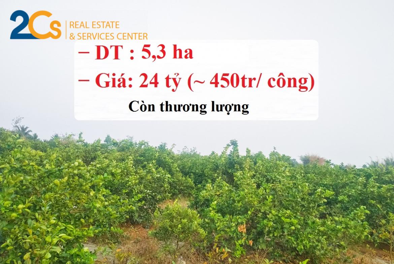 Bán lô đất hơn 5,3 ha (53.220,8 m2) gần lộ N2 tại Bến Lức