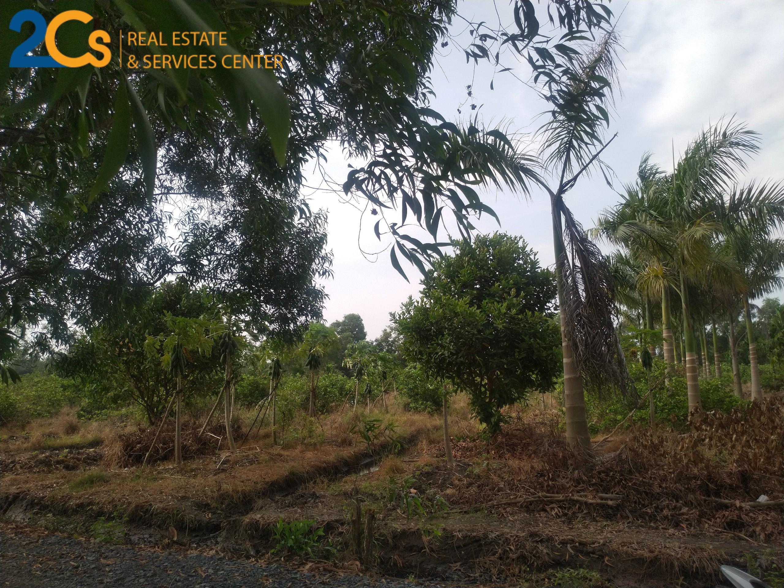 Bán 1.000m2 đất mặt tiền đường tại huyện Bến Lức, tỉnh Long An
